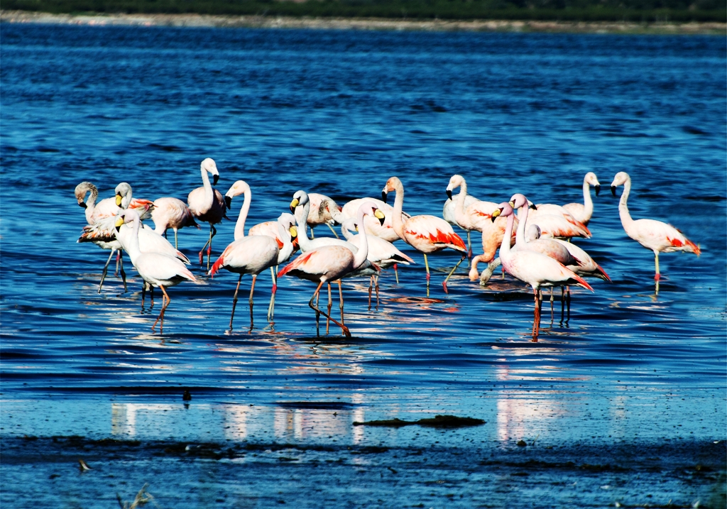 Avistaje de aves: Córdoba en la mirada del Mundo