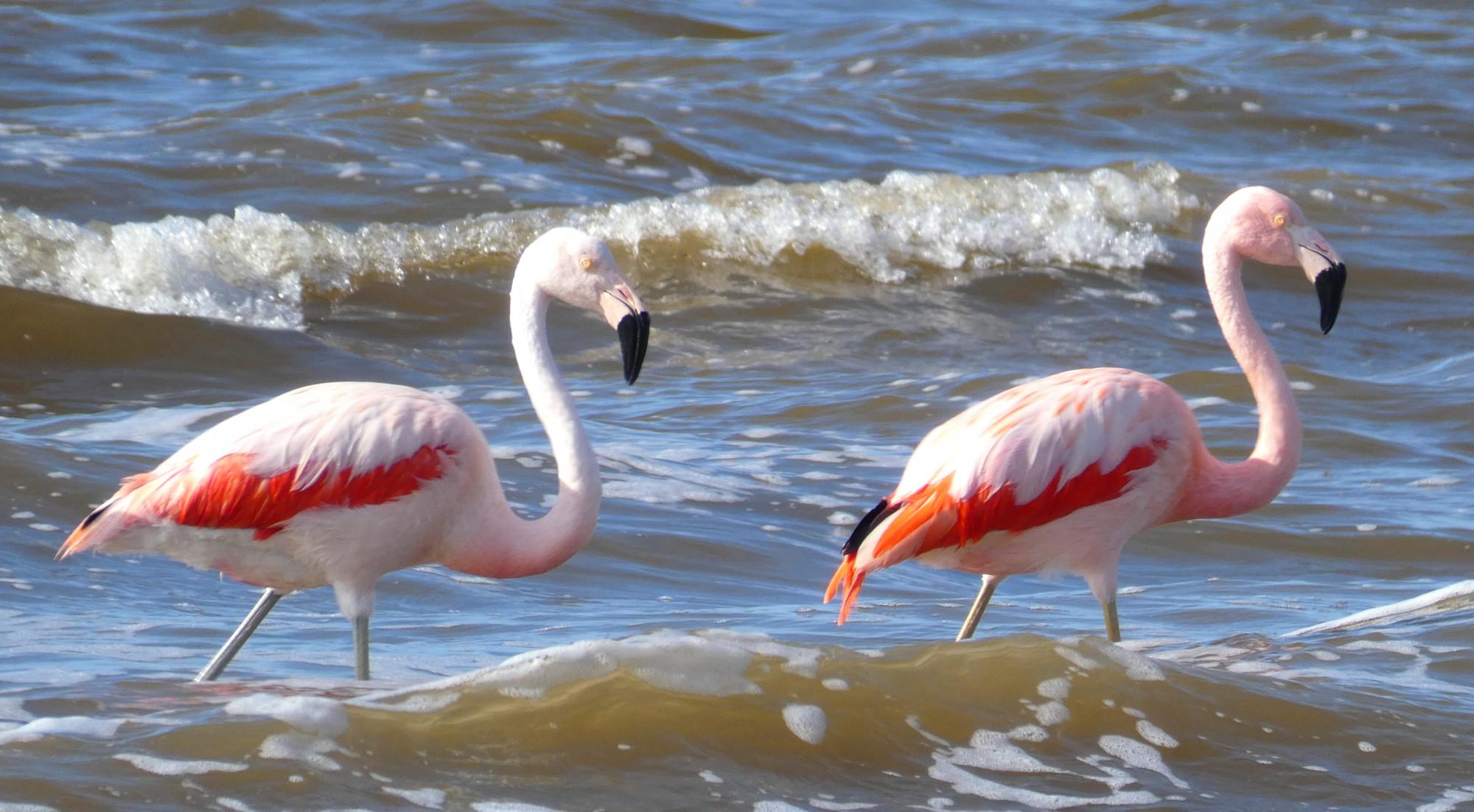 Miramar de Ansenuza, ideal para el avistaje de aves y el senderismo