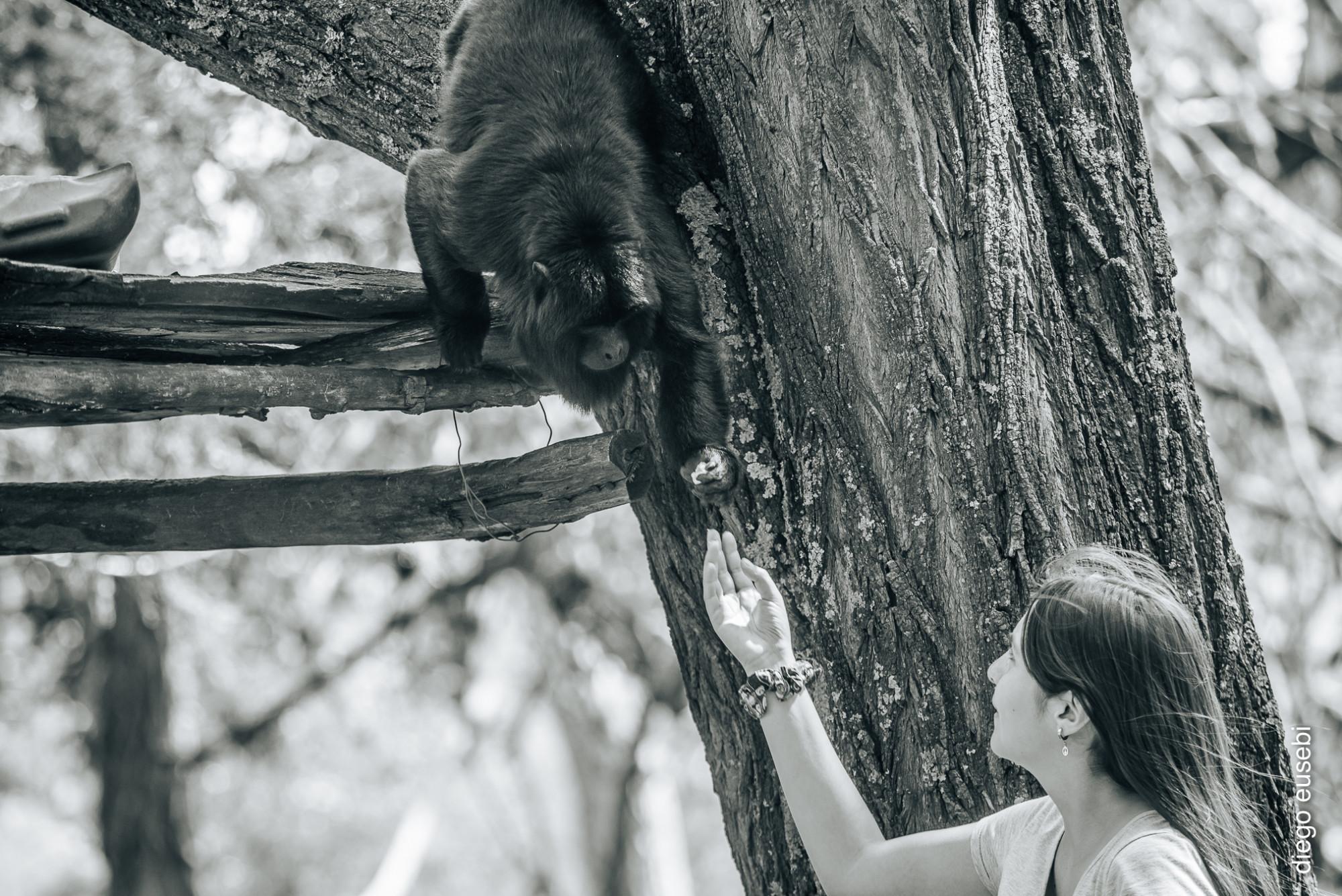 Proyecto Carayá: dónde los Monos vuelven a ser Monos