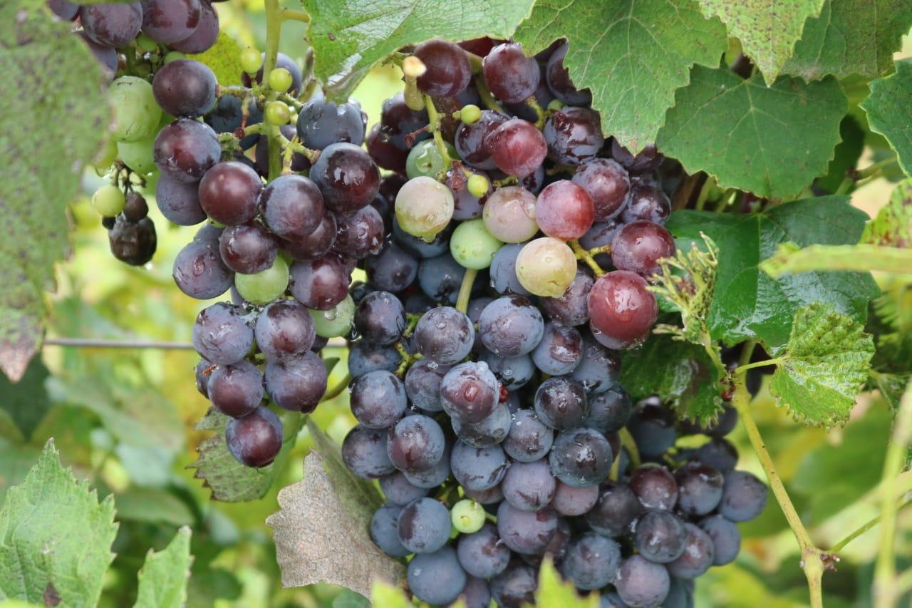 Jornada de trabajo con productores vitivinícolas para potenciar Los Caminos del Vino de Córdoba